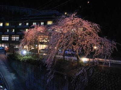 玄関前のしだれ桜 夜